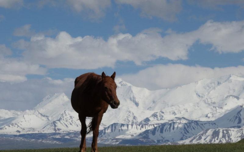 K pohoriu Pamír medzi nomádov